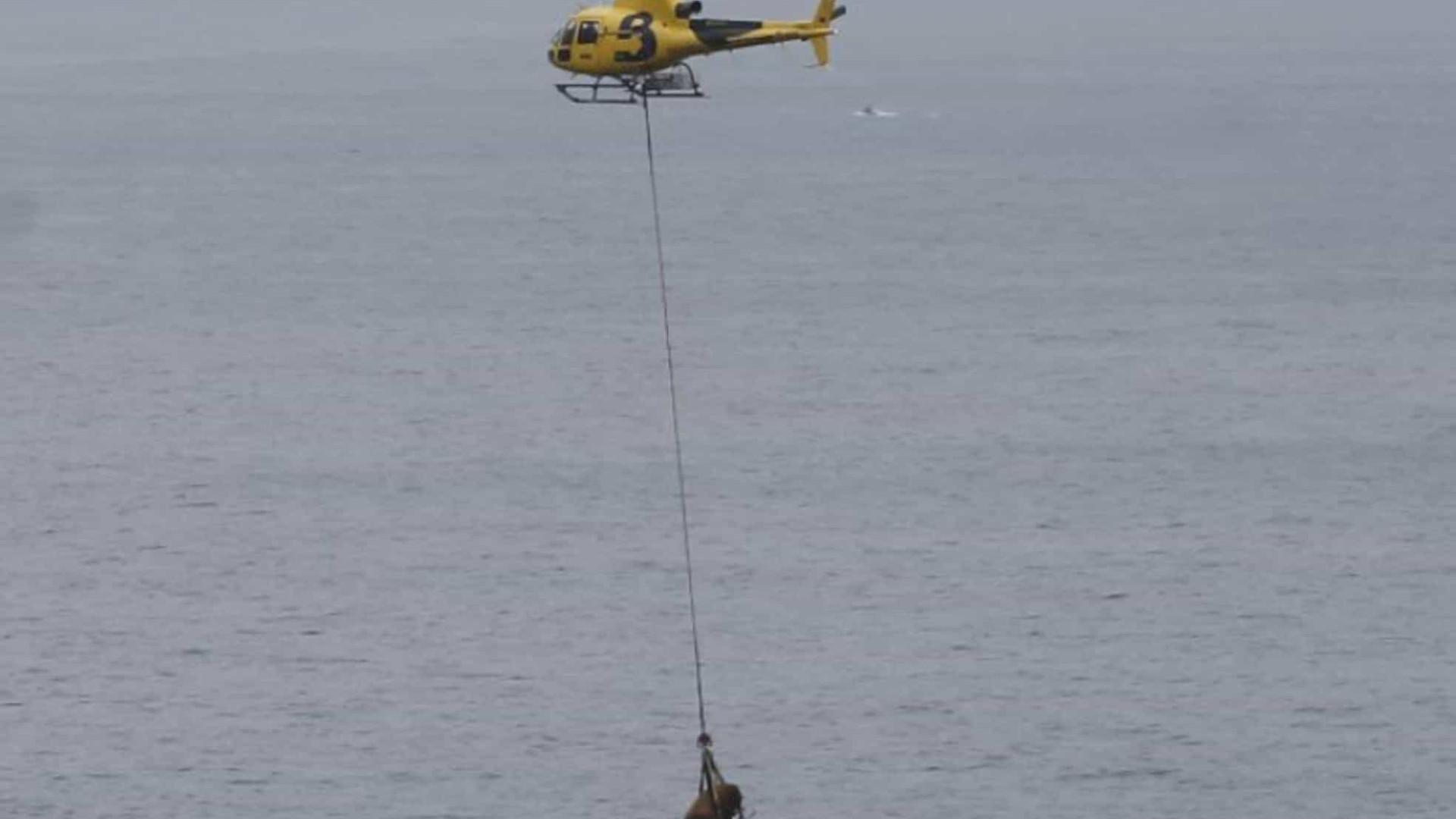 Touro de 800 kg é resgatado por helicóptero em praia espanhola