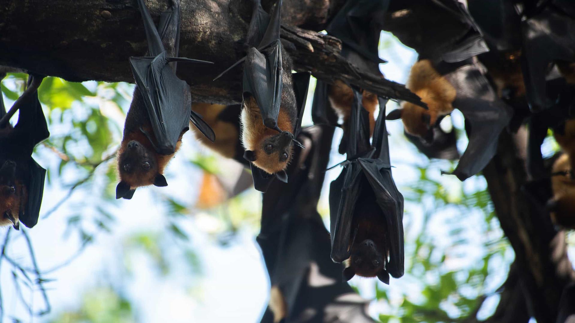 Maioria das doenças infecciosas tem origem em animais selvagens