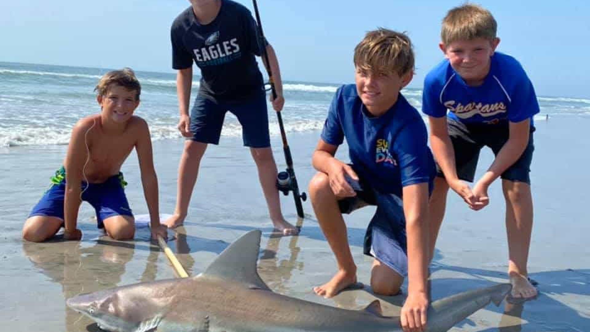 Menino de 12 anos pesca tubarão raramente visto à superfície do oceano