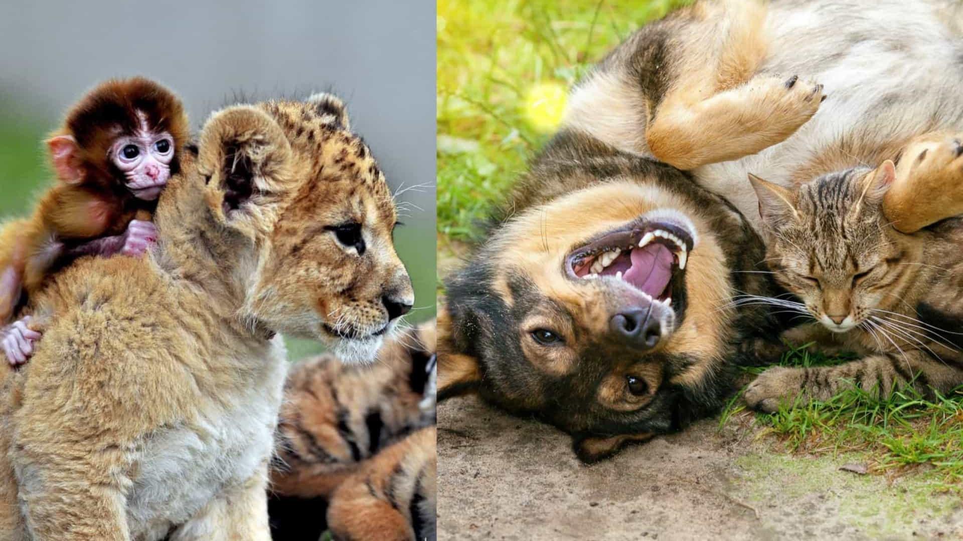 As amizades mais improváveis do reino animal!