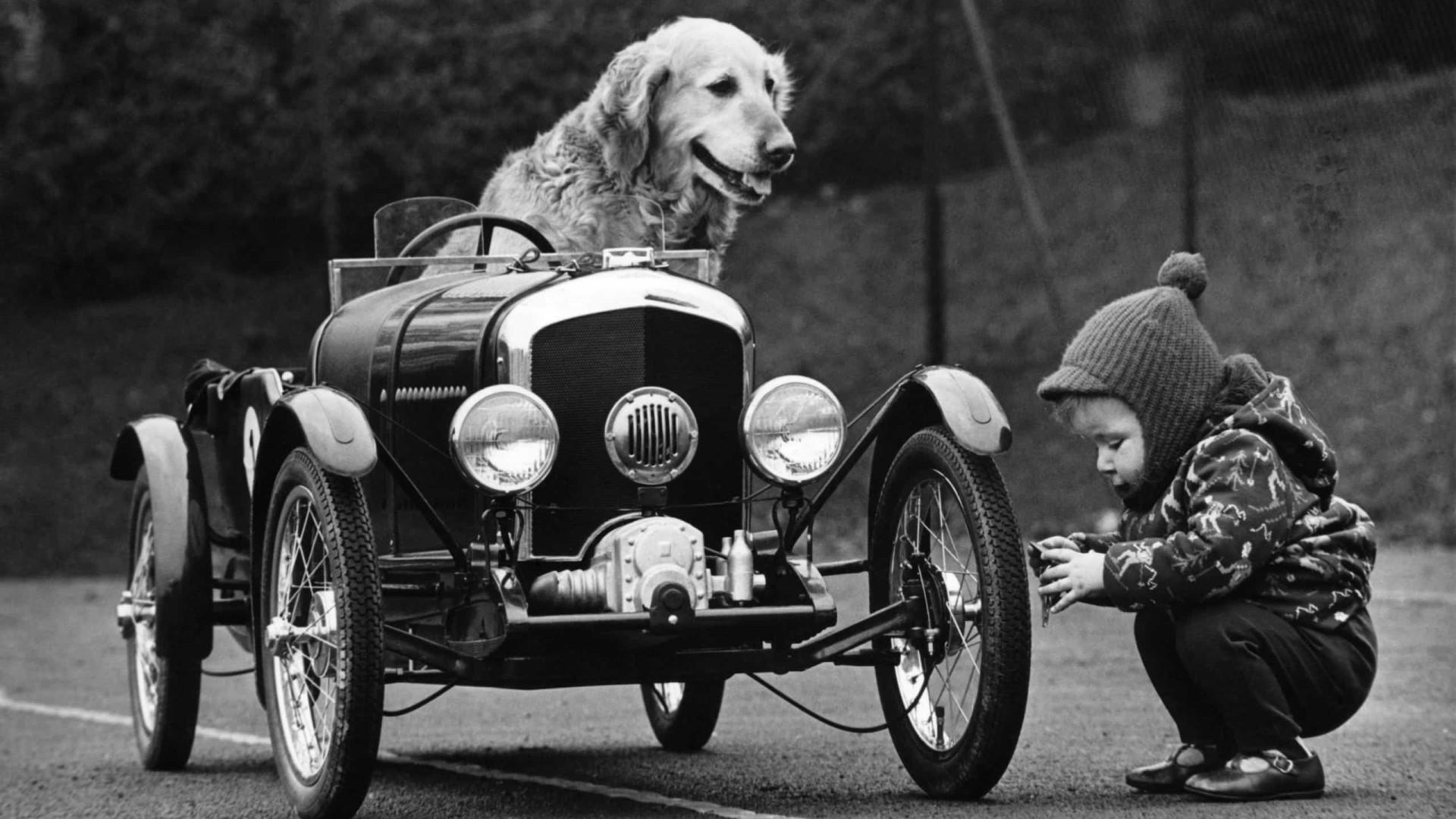 """Cenas fofas e surpreendentes de cães """"dirigindo"""" e aproveitando o passeio"""