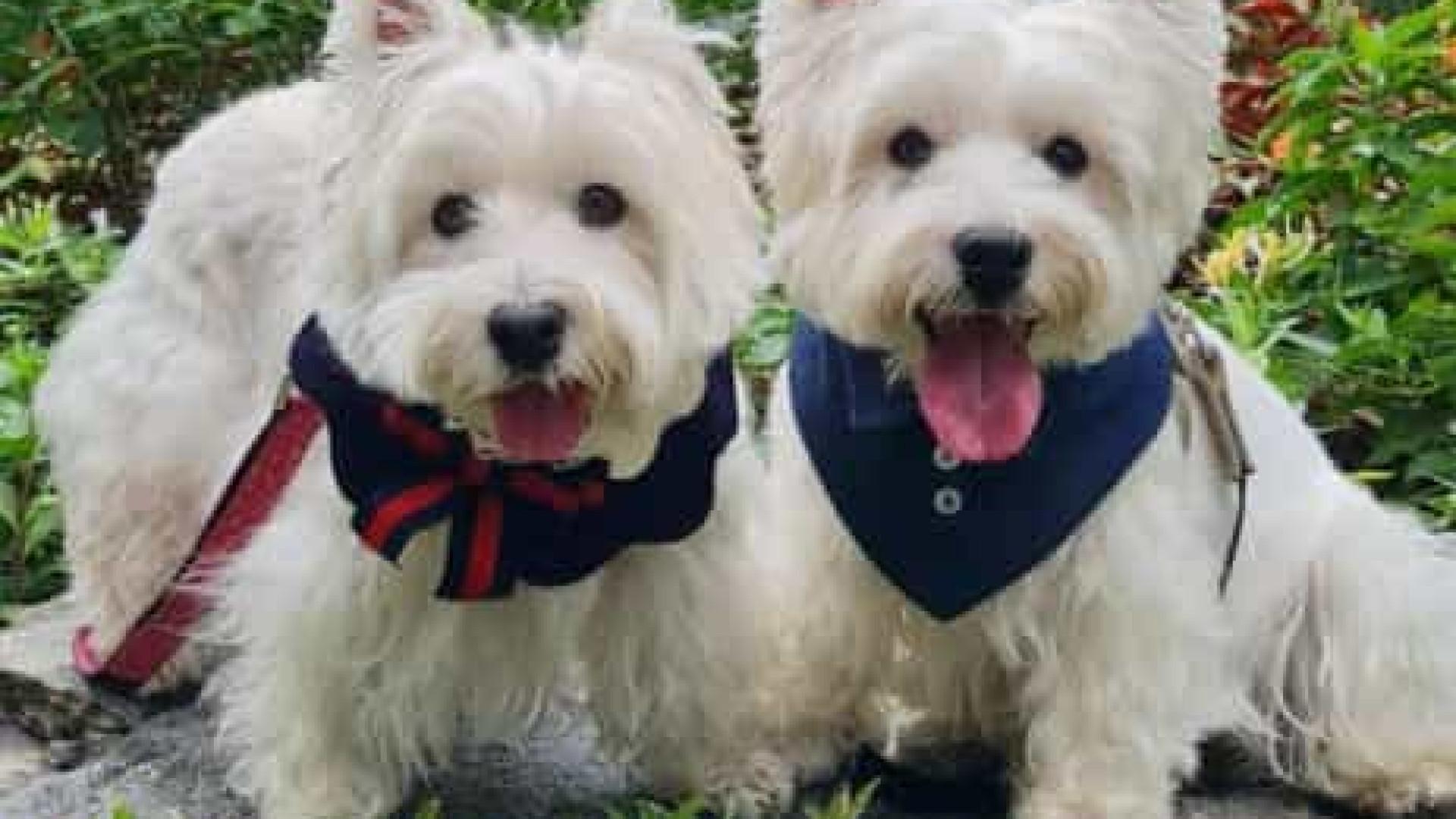Dogfluencers: cães de Cingapura são tendência no Instagram