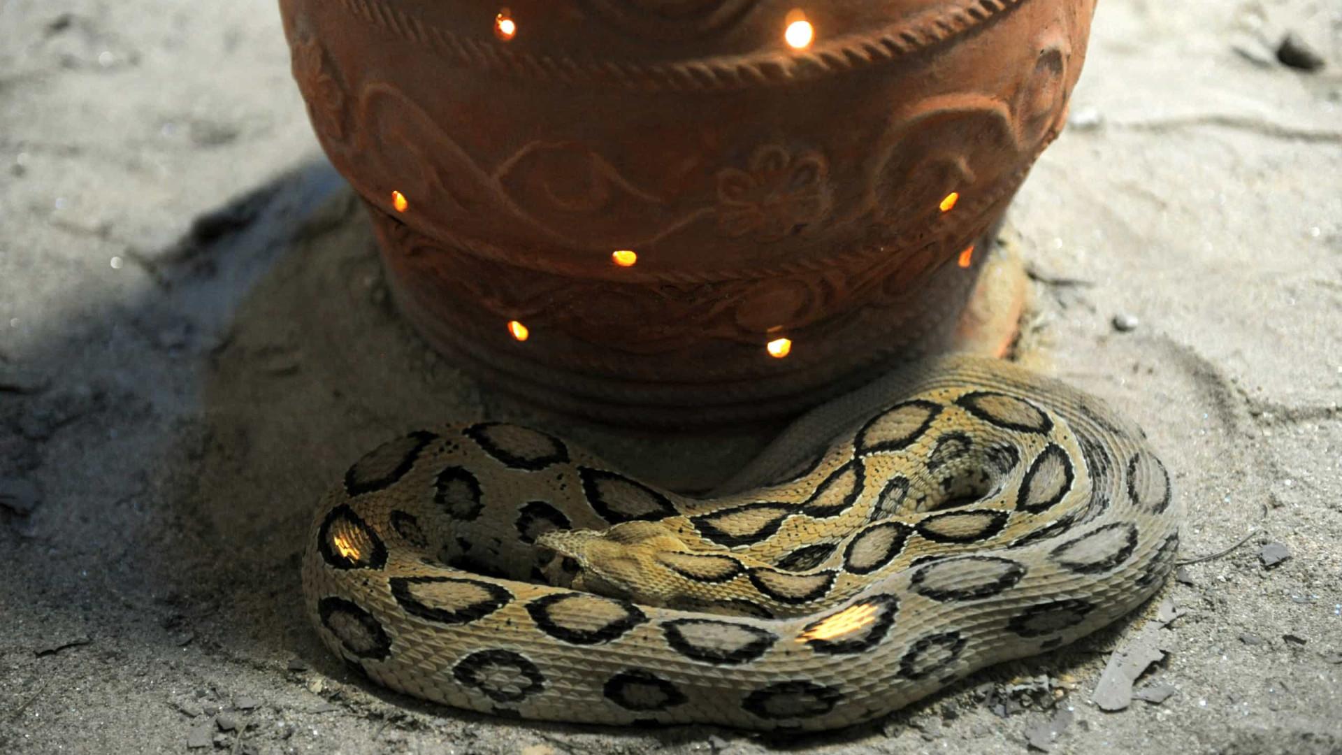 Homem condenado a prisão perpétua na Índia por matar esposa com cobra