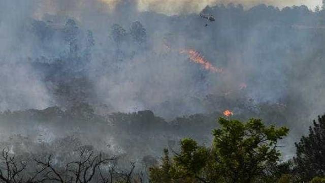 Incêndio atinge reserva ecológica do Jardim Botânico de Brasília
