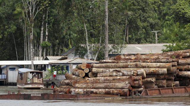 Caingangues ocupam Floresta Nacional para pedir terra