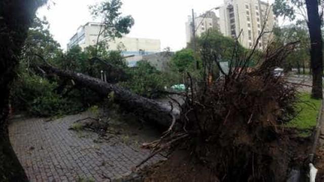 Após chuva, SP sofre com queda de árvores e falta de energia