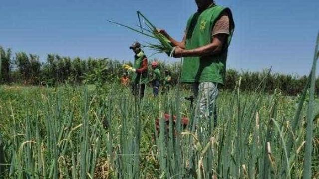 Brasil vai propor que G20 não aumente subsídios agrícolas