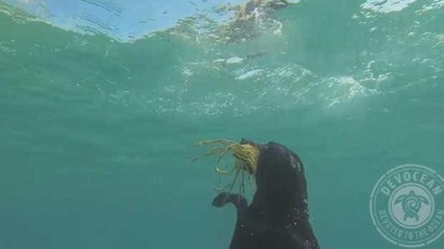 Labrador faz sucesso na Internet ao capturar lagosta no fundo do mar