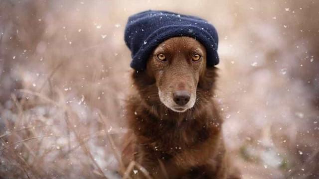 24 belas imagens de cães em cenários da Áustria