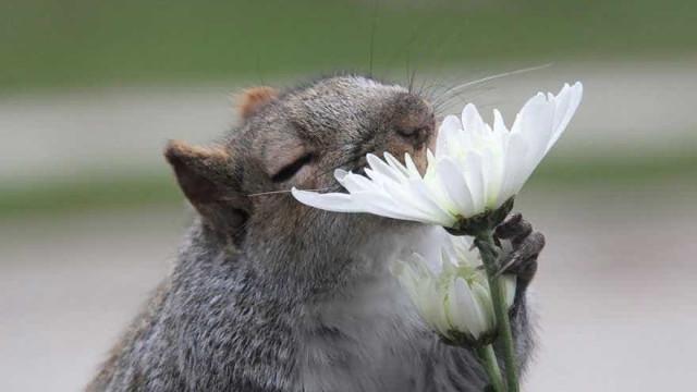 15 fotos mostram a fofura de animais sentindo o perfume de flores