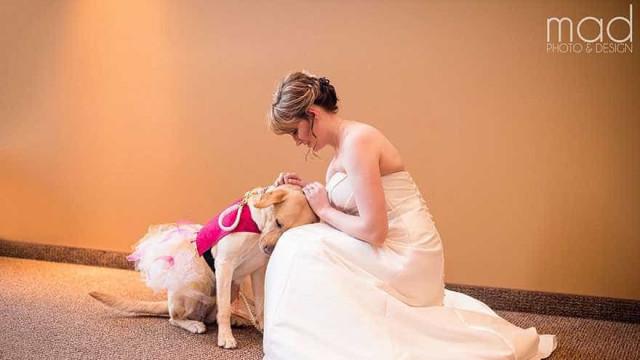 Labrador 'salva' casamento ao acalmar a noiva  antes do altar