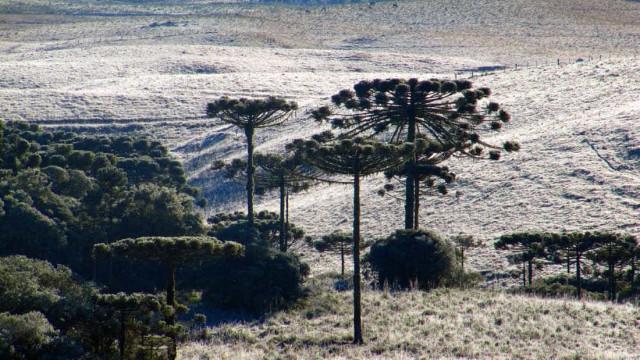 Serra gaúcha tem neve e temperatura negativa