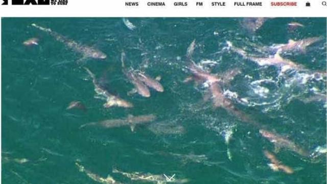 Mar infestado de tubarões adia campeonato de surfe no leste da Austrália