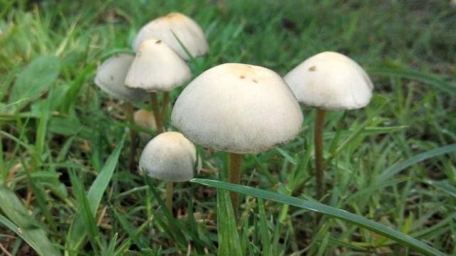 Cogumelos mágicos podem ajudar doentes oncológicos