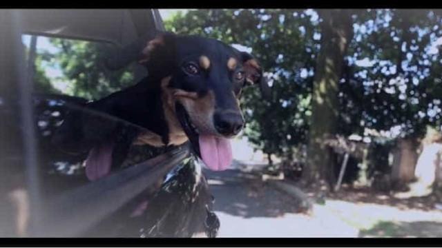 30 milhões de cães e gatos vivem nas ruas do país; veja vídeo