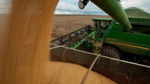 Mais da metade da safra nacional de grãos é produzida em 4 estados