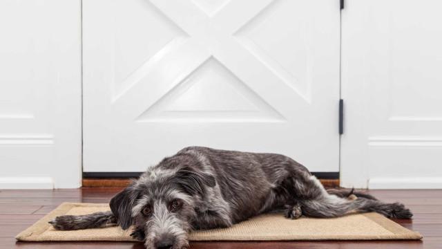 Por quanto tempo o cachorro pode  ficar sozinho em casa?