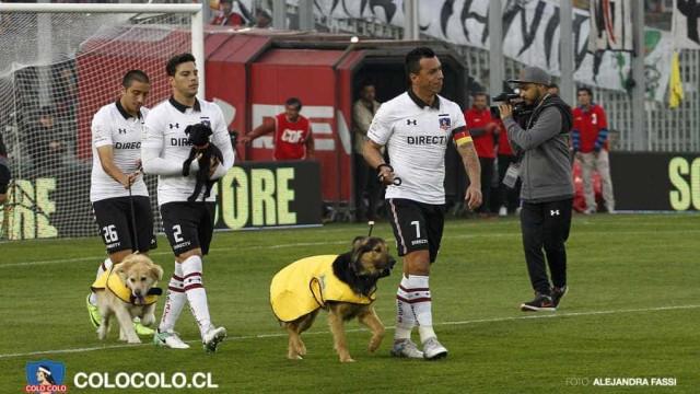 Jogadores do Colo-Colo entram em campo com cachorros; entenda