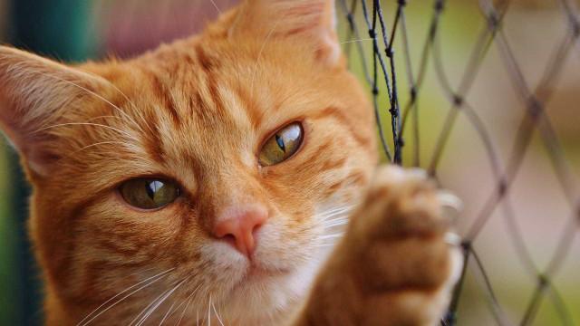 Homem que cuidava da mãe morre e é achado sendo comido por gatos
