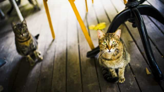 60 gatos morreram envenenados na UFPB em 8 meses, mostra levantamento