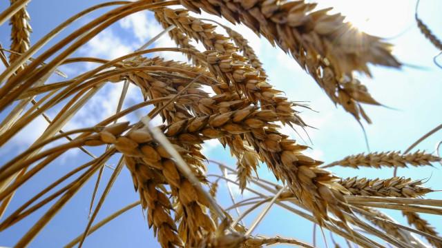 IBGE estima queda de 9,2% na safra de cereais em 2018