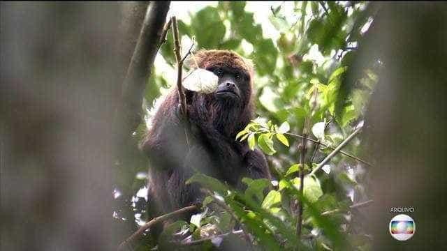 Macaco morto por febre amarela fecha zoológico e Jardim Botânico de SP