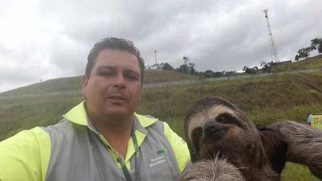 Bicho-preguiça 'faz selfie' após ser resgatada em rodovia