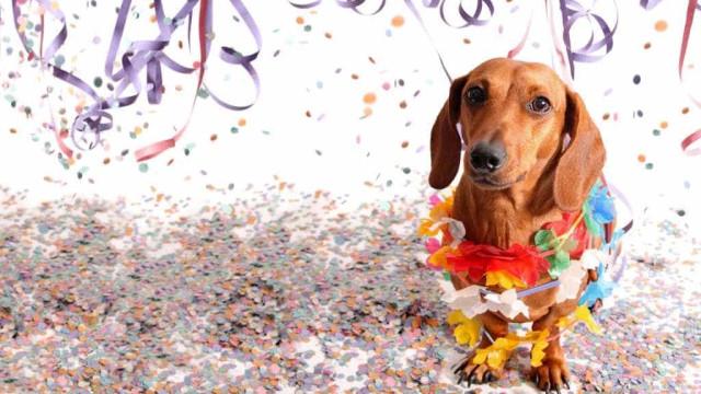 Saiba como preparar seu pet para a folia do carnaval