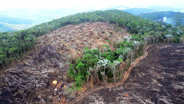 Seca na Amazônia pode ser tão nociva para o clima quanto desmate