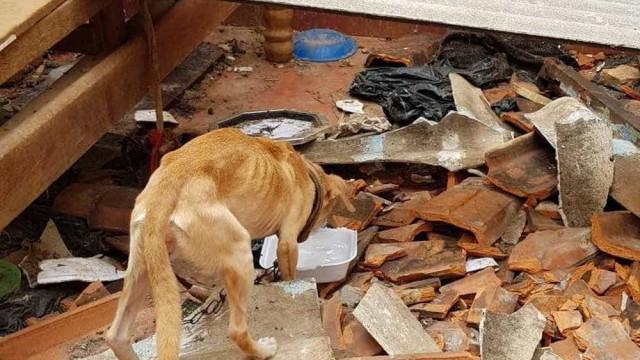 Animais resgatados de casa demolida são internados e estão para adoção