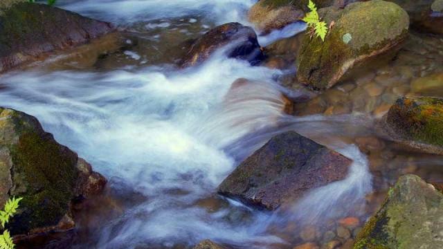App permite doação em dinheiro para recuperação de nascentes de rios