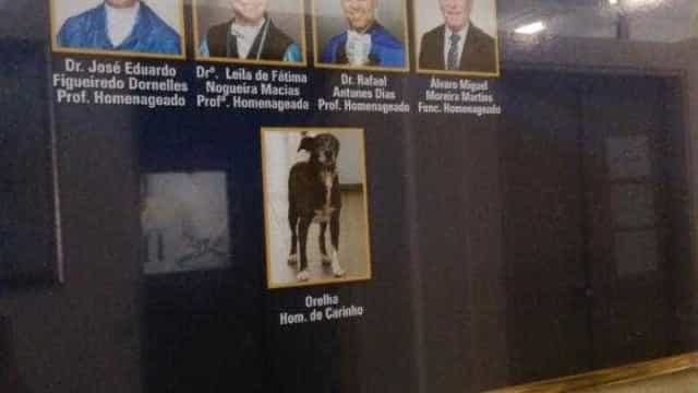 Cachorro que vivia em campus é homenageado em quadro de formatura