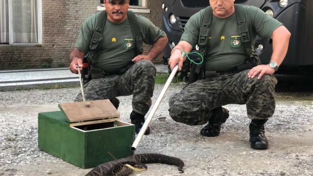 Ambulante é picado por cobra e tem rim e fígado atingidos por veneno