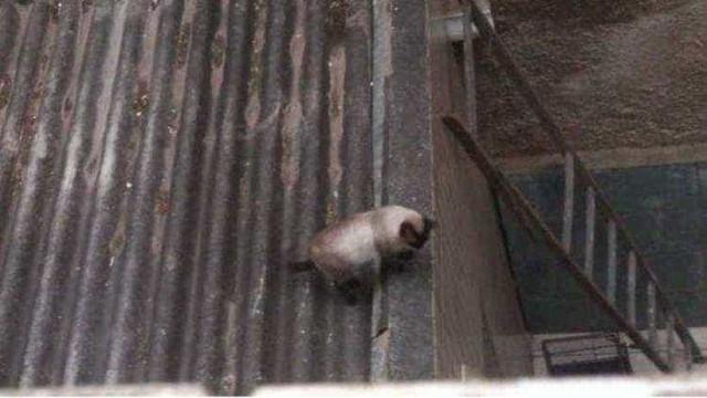 Homem proíbe resgate de gato em seu telhado e gera polêmica