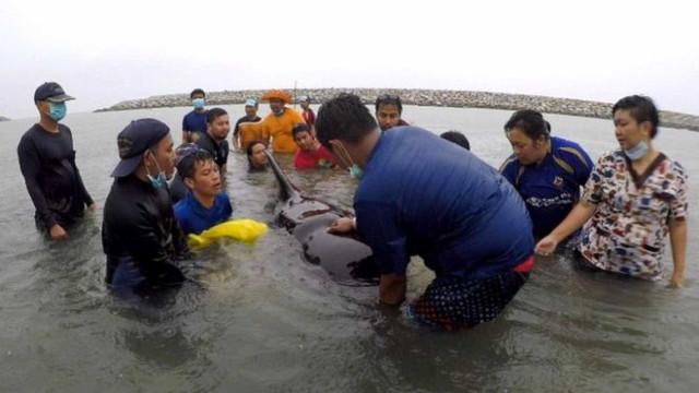 Baleia morre após comer 80 sacos plásticos