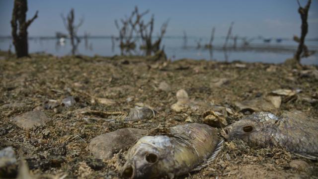 Seca é maior desastre ambiental do País e ocorre em todo o território
