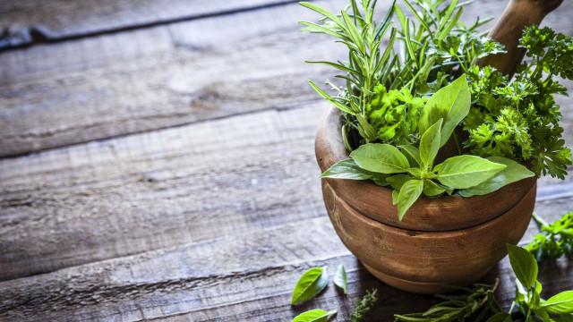 Aprenda a plantar ervas medicinais em casa
