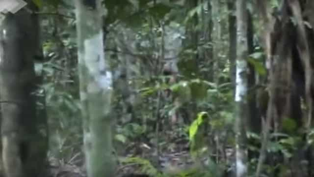 Funai revela vídeo de último sobrevivente de tribo indígena isolada