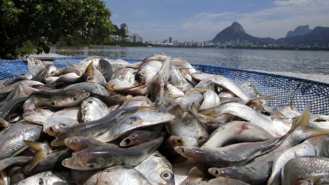 Carne, soja e pesca têm ligações estreitas com paraísos fiscais