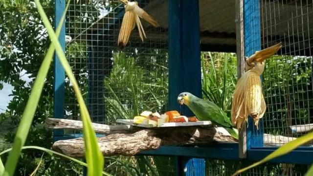Ibama devolve mais de 200 aves à natureza