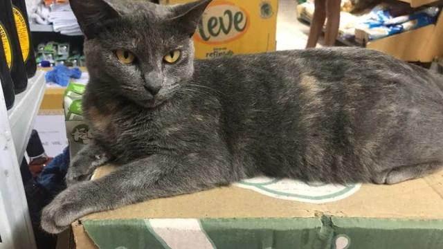 Cliente mata gata a pauladas dentro de mercado em Paraty