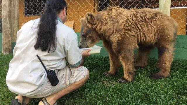 'Ursa mais triste do mundo' ganha piscina para aliviar calor