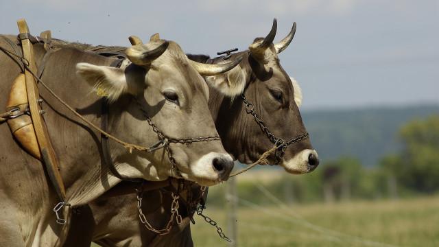 Agropecuária é alvo de impasse entre EUA e Brasil