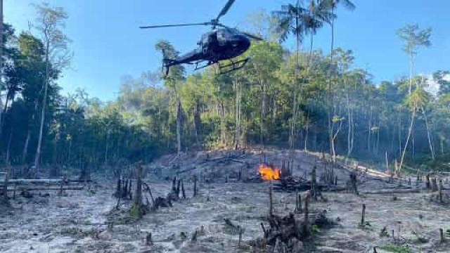 PF finaliza operação Muçambê III e destrói 350 mil pés de maconha