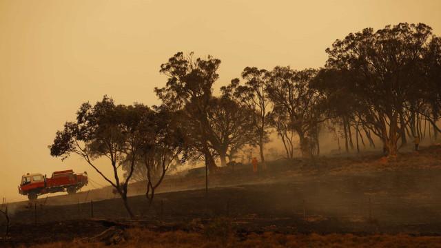 Um quinto das florestas australianas arderam devido a seca extrema