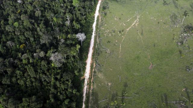 Desmatamento na Amazônia bate recorde e cresce 29,5% em 12 meses
