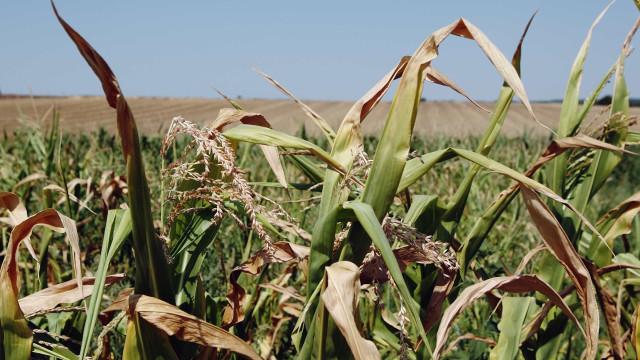STF mantém validade de cobrança patronal para Previdência rural