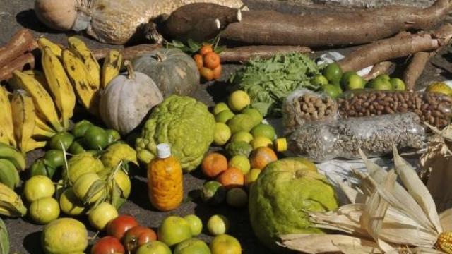 Governo anuncia compra de alimentos da agricultura familiar