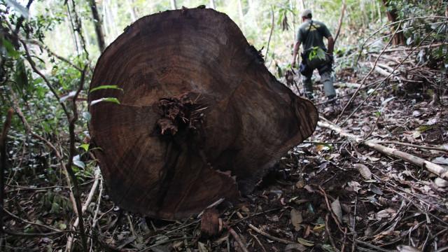 Combate ao desmatamento 'começou tarde', diz Mourão