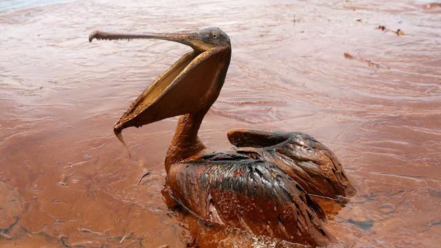 Ibama identifica manchas de petróleo em região de desova de tartarugas